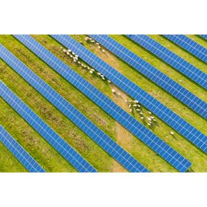 energy updates- Sheep in Solar Farms