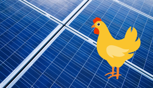 solar panel and chicken
